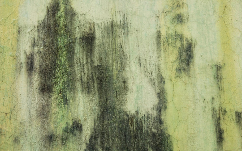 mold on a green wall
